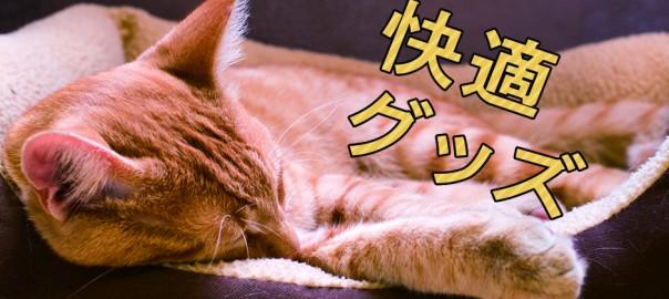 贅沢させてにゃん♪あなたのネコがもっと幸せになれる18の商品