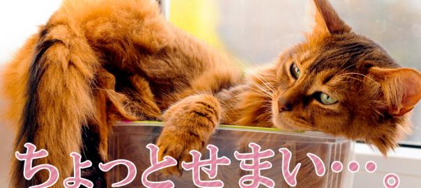 「おかしい・・・昔は入れたのに」小さい箱に入りたい猫15選