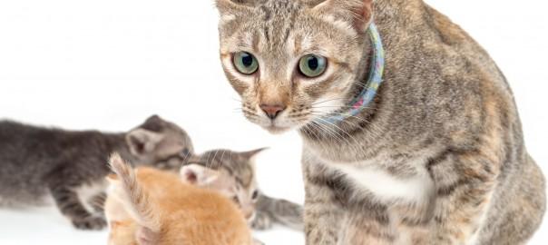 動物だって大変!母親の苦労をよく知る動物16選