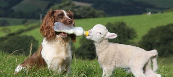 【種族の違いを超えて】家族のような固い絆で結ばれる動物たち24選