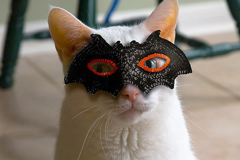 cat-bat-mask