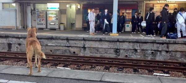 動物だって旅をする。電車に迷い込んだ珍客 13選