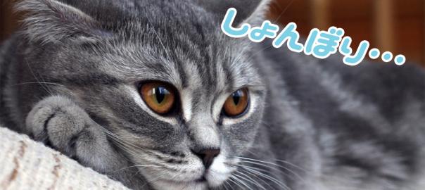 この猫に一体何があったの?ケンカ中に何かを悟って落ち込む猫が可愛すぎる