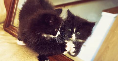 【音量注意】ほのぼのから一転。遊びに来たネコが鏡に映ると・・・(23秒)