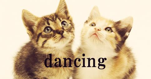 どうしてこの子たちは踊っているんだ?子猫2匹の息がピッタリすぎるダンス