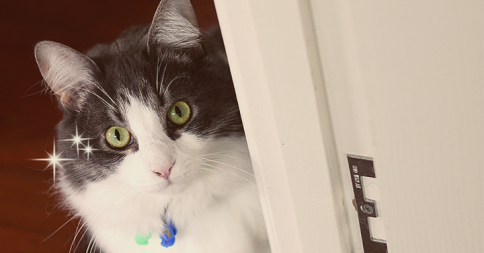 可愛さの秘訣!好きな人だけが知っている「ネコの行動」19選