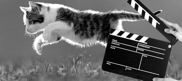 【ホンワカ】有名映画のワンシーンに猫を挿入してみた