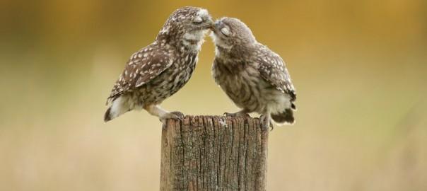 ヒューヒュー!なんだかほっこりしてしまう「動物たちのキス」20選