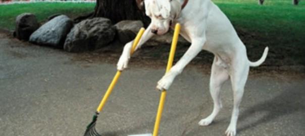 世話など必要ないわん!世界の自立した犬たち