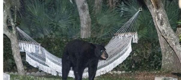 ケモノの休日。街に突如現れた熊の驚きの行動
