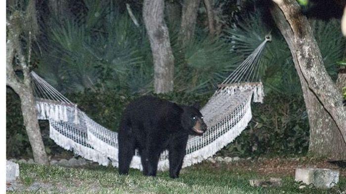 bear_rest_04