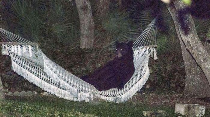 bear_rest_05