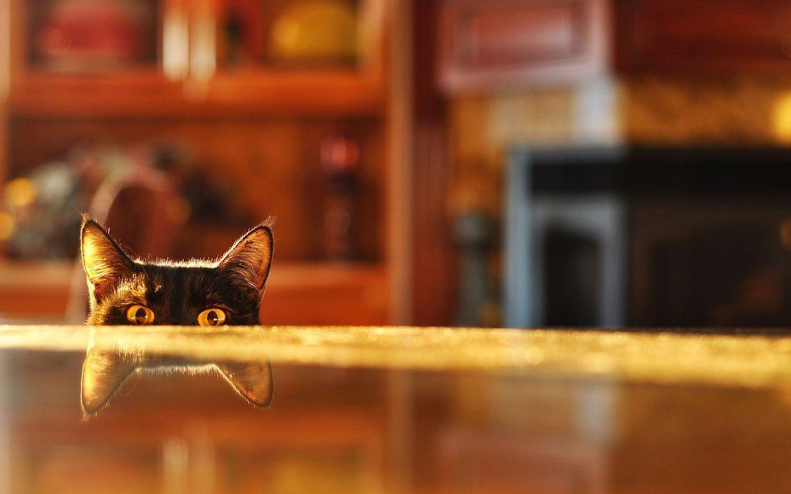 Peep-curious-kittens