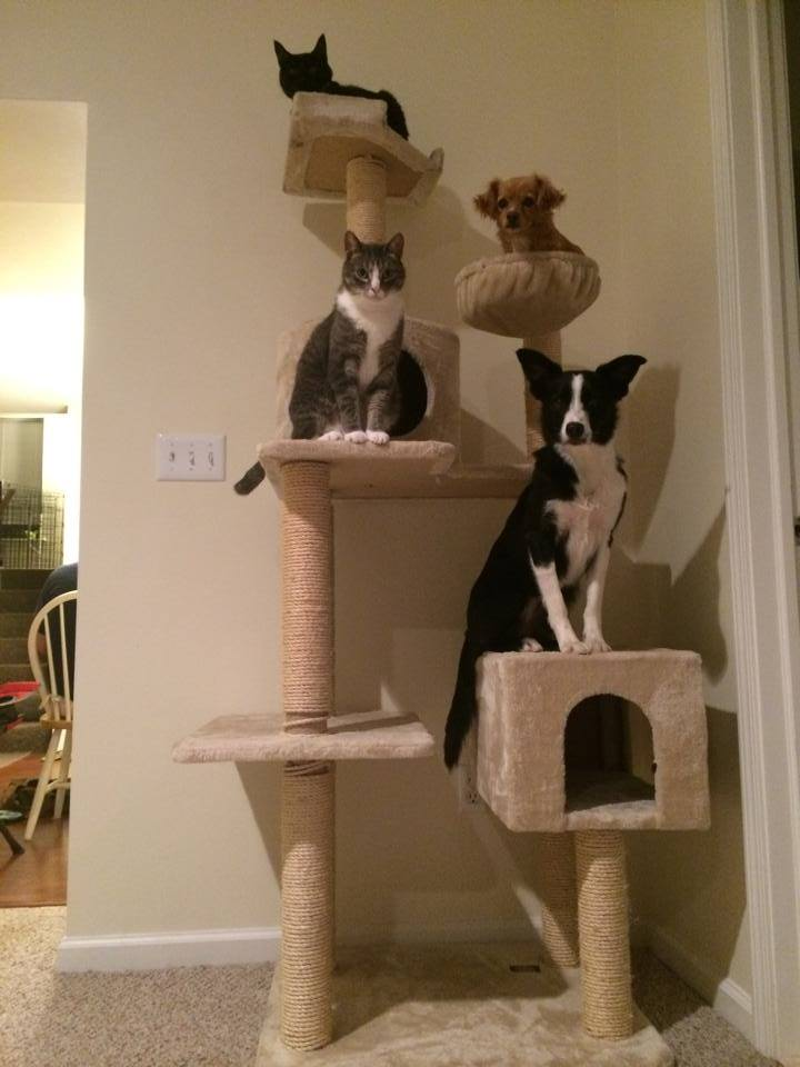 ネコのマネをする犬