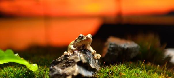 【カエルまみれ】スマホの映像を餌だと勘違いして大量のカエルが集結(01:00)