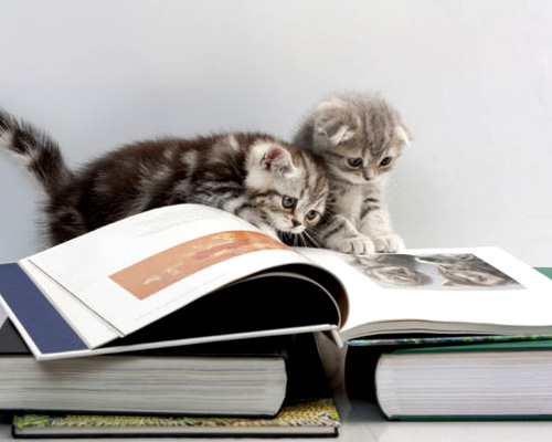 cats are reading a book