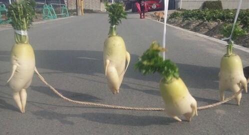 大根が農家から脱走中!?野菜界のアイドル「逃げる大根」がほっこりする