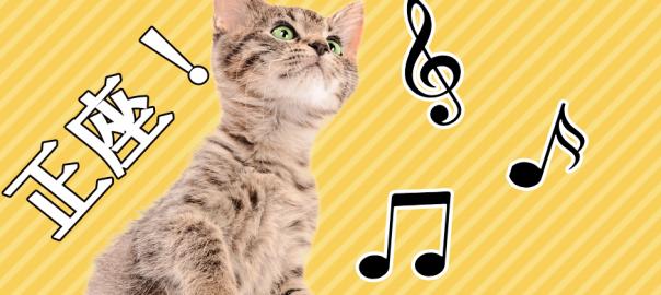 日本の文化は動物にも伝わっていた!国歌を聞くとなぜか正座するロシアの猫