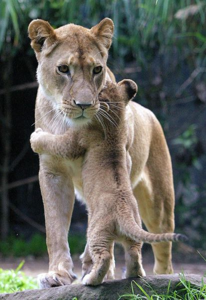 動物親子33