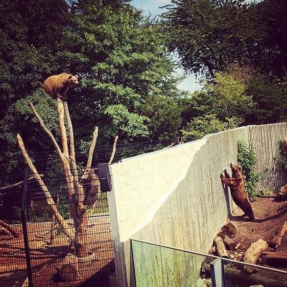 動物園での出来事13