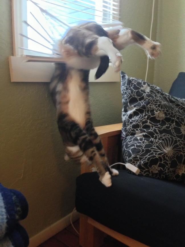 ブラインドに引っかかる猫