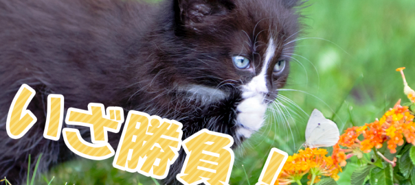 かかってこいにゃあ~~!常に戦いに身を置くネコたち13選