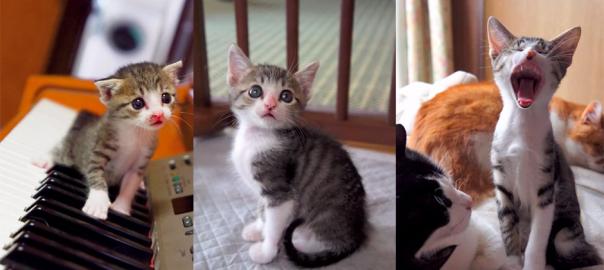 か...かわいすぎる......子猫の「おはぎちゃん」の生後から3ヶ月間の成長記録