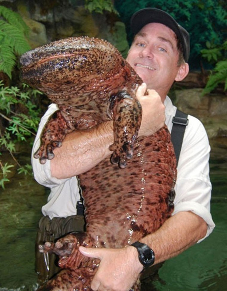 実在した巨大生物・サンショウウオ