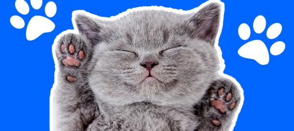 寝ぼけてる?謎のハンドサインを送ってくるネコが可愛い