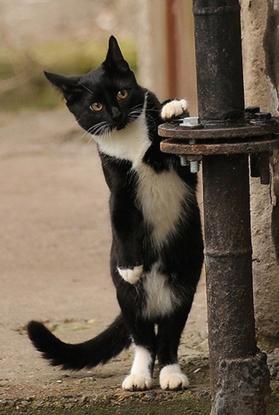 ネコだけど、モデル7