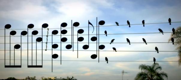 電線に止まる鳥を音符にしてメロディーにしてみた♪