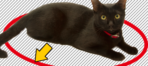 ネットで「猫転送装置」が話題!チョコンと座ったネコが可愛すぎる