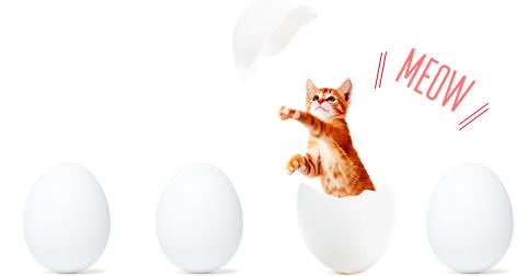 羨ましい限り。来世でネコに生まれ変わるべき20の理由