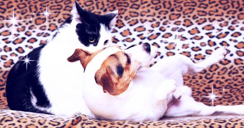 相性ぴったり。にゃんだかんだで仲良しな犬と猫18選