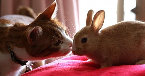 「ボクが世話するにゃん」そう言って子ウサギの面倒を見てあげるネコ