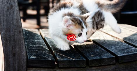 海外「この身のこなしはまさか!?!?」猫が忍者だとわかる19の証拠