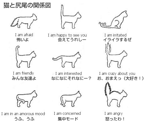 ネコの尻尾と気持ちの関係図
