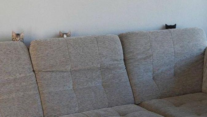 ソファに隠れる猫