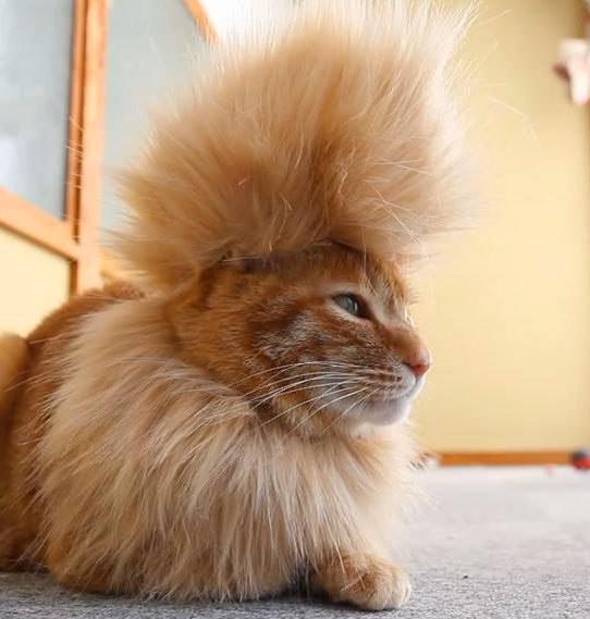 完全に一致なネコモデル14 のコピー