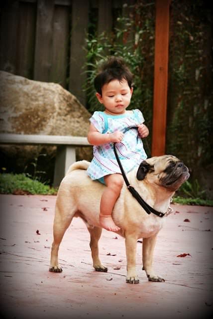犬に乗る少女