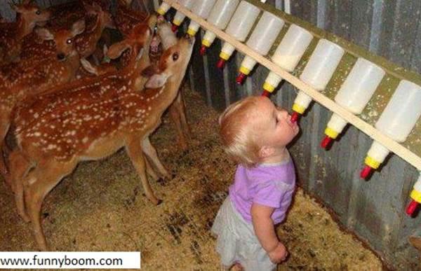 ミルクを飲む赤ちゃんシカと子供