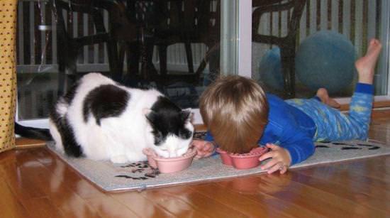 キャットフードを食べる子供