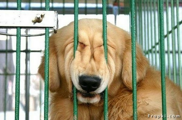 funnypuppyincrate