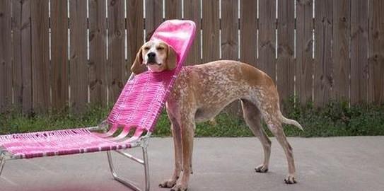 犬、それは好奇心の塊。なんでにでも首をつっこみたい犬たち