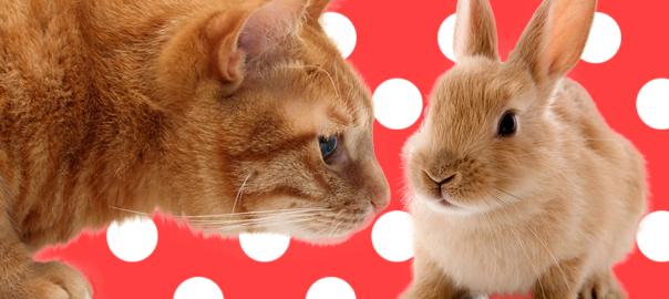 【ホッコリ】ウサギを子ネコと間違えて世話しちゃう優しいネコ