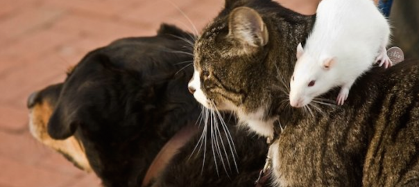 【異種愛】10年旅したパートナーはイヌとネコとネズミ