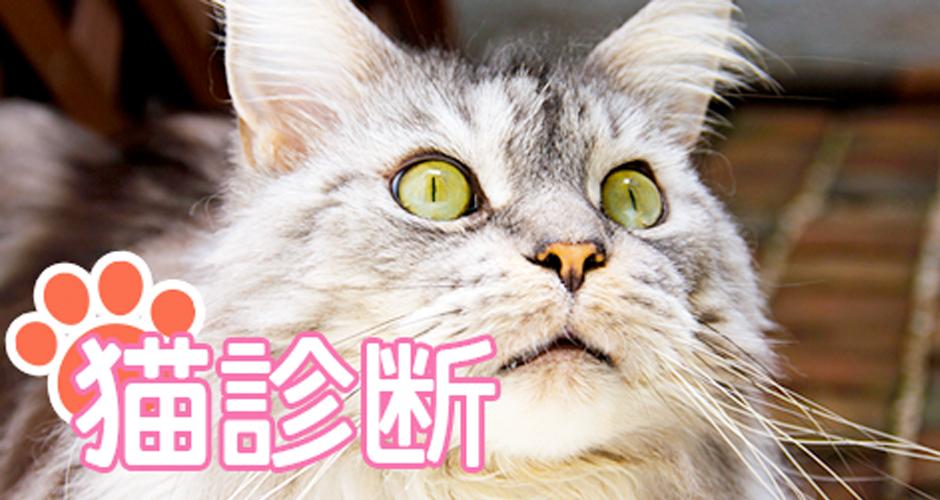 【あなたを猫に例えると?】性格から選ぶ猫診断