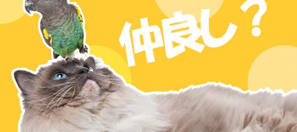 ちょっかいを出すオウムと無抵抗な猫の不思議な友情