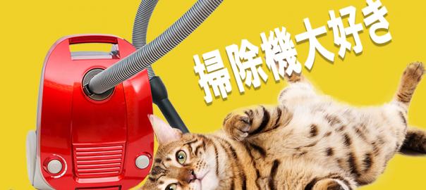 「あぁ〜気持ちいにゃん♪」無防備に掃除機で吸われまくるネコ