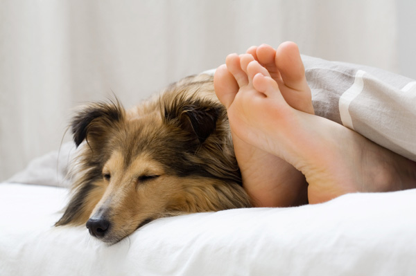 woman-sleeping-in-bed-with-dog